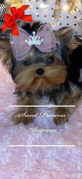 Sweet Princess Arianna