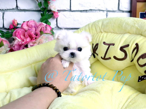 Pending Deposit! One in a Million Practically Perfect Micro Tiny Baby Vanilla - $6500