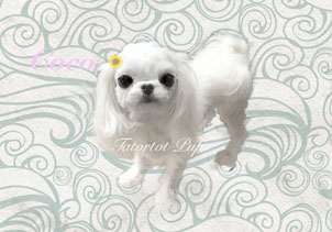 Coco Chanel - A Extreme Tiny Up and short nose Babydoll!