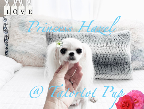 Princess Hazel - Very Beautiful  Up nose - Ms. Eyes!