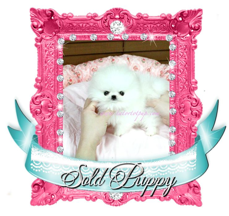Platinum Pom Arabella SOLD