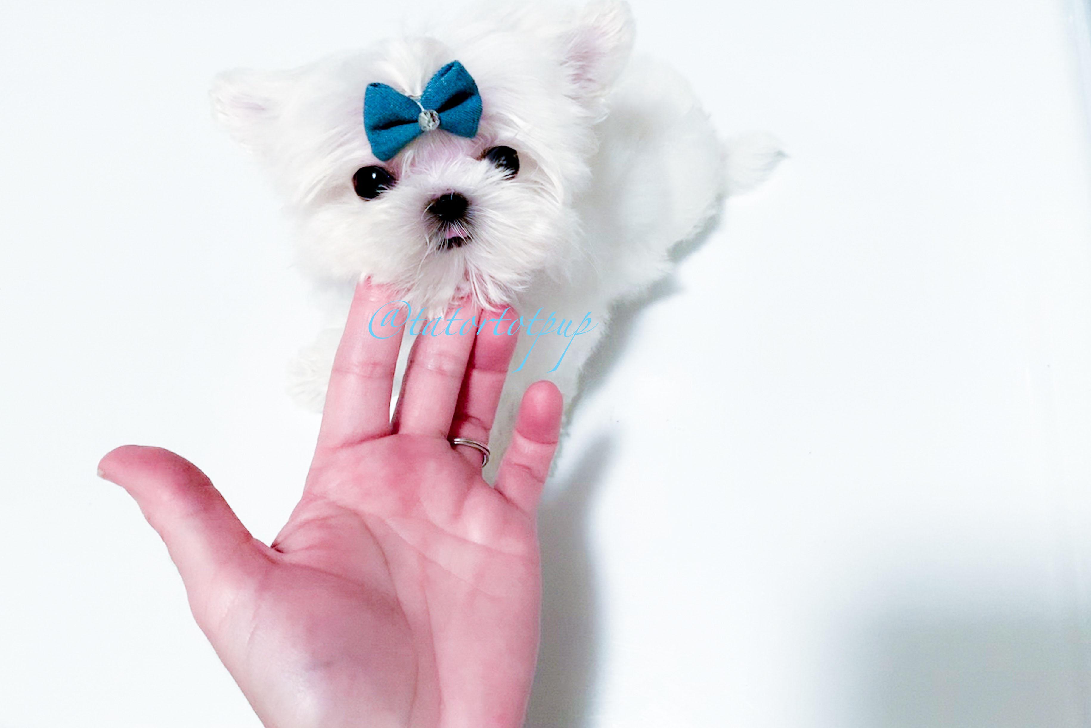 Micro Tiny Romeo SOLD