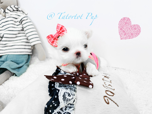 Sold! - Princess Tatianna is waiting to be reserved!  She is $5500 and $1000 will hold her now