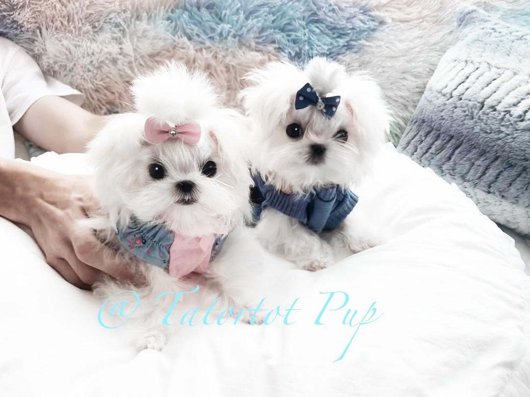 Annalee & Cherry Sold!